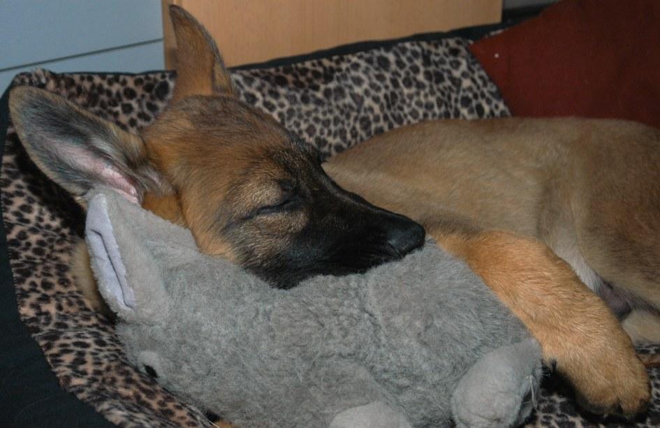 Auch kleine Hunde schlafen nicht gerne alleine