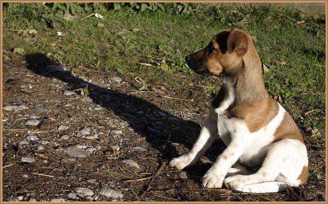 Auch kleine Hunde werfen manchmal lange Schatten