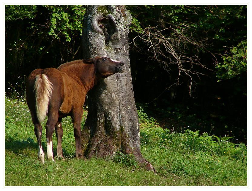 Auch kleine Pferde juckt es mal