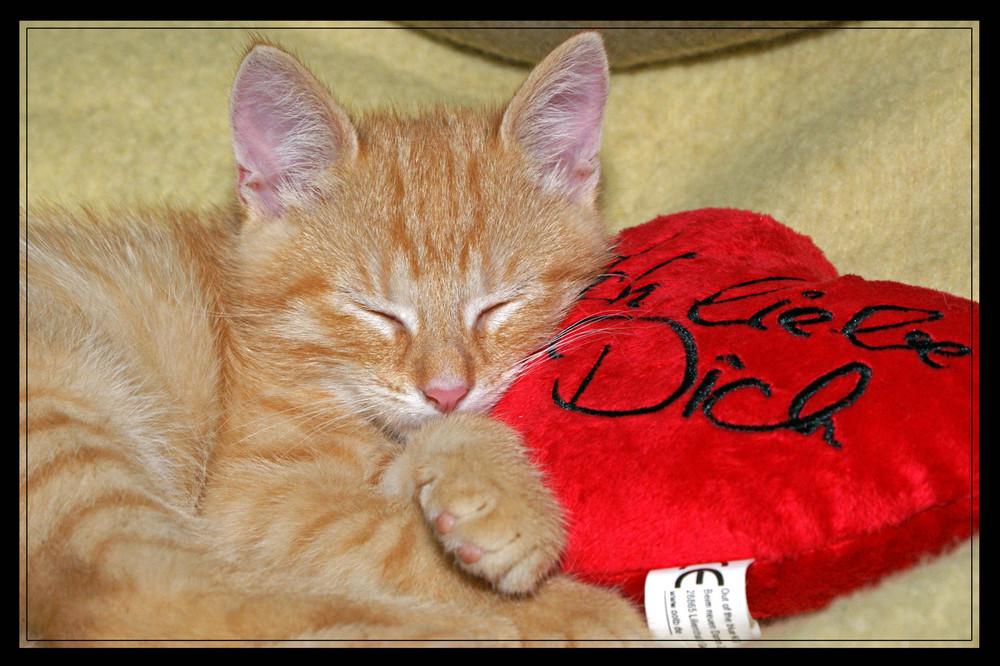 Auch kleine Tiger müssen einmal schlafen...