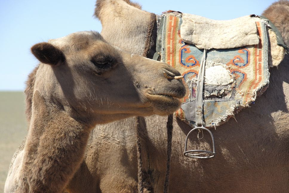 auch Leben in der Wüste