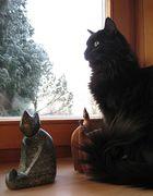 Auch Lucky liebt den Aussichtspunkt im Erker
