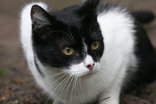 Auch Mai(ne) Katze