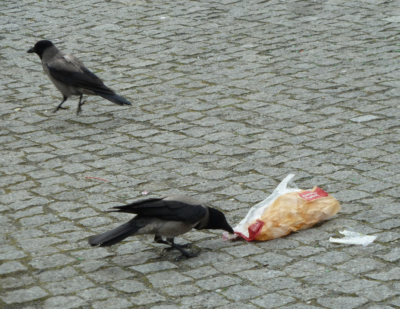 Auch Nebelkrähen lieben Fast food.