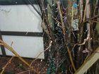 Auch Netze müssen gewaschen werden......