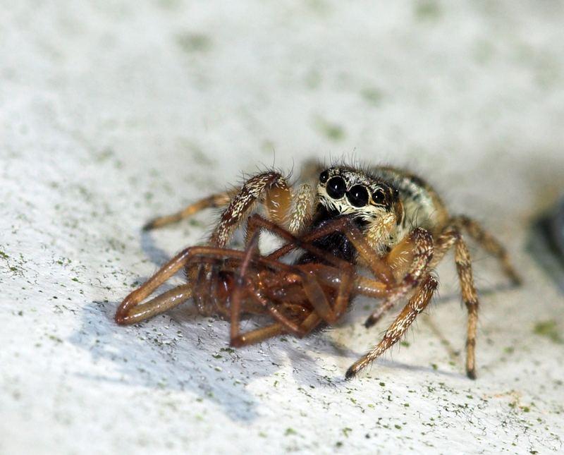 auch niedliche kulleraugen spinnen m ssen fressen foto bild tiere wildlife spinnen. Black Bedroom Furniture Sets. Home Design Ideas