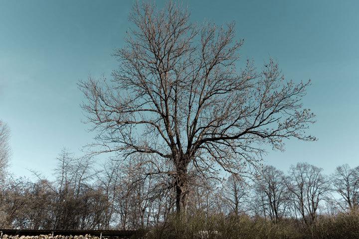 Auch nur ein Baum