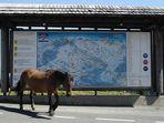 Auch Pferde wandern nach Plan