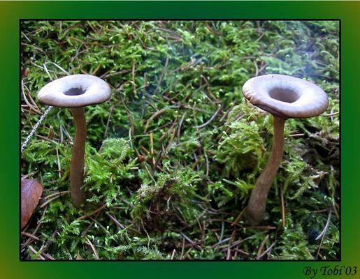 Auch Pilze Rauchen