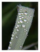 auch Regentage haben ihren Reiz