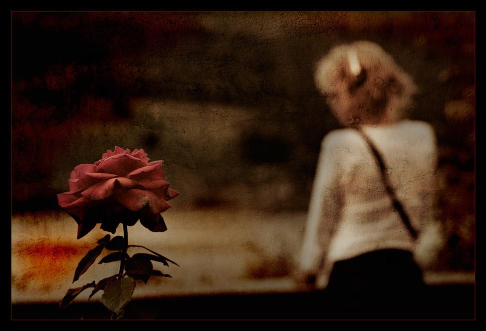 Auch Rosen weinen