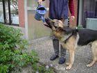 auch schäferhunde muss man manchmal gießen :-)