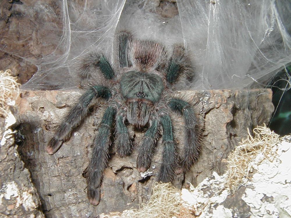 Auch Spinnen haben ein Gesicht!