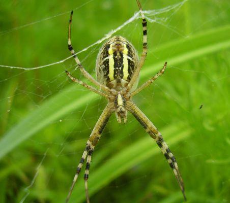 Auch Spinnen können schön sein
