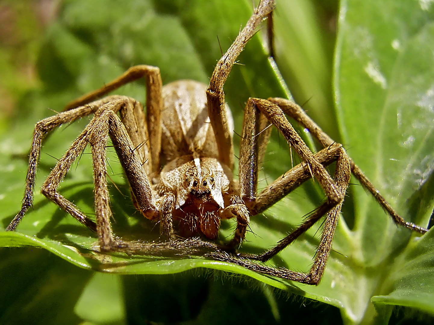 ... Auch Spinnen können Yoga ...