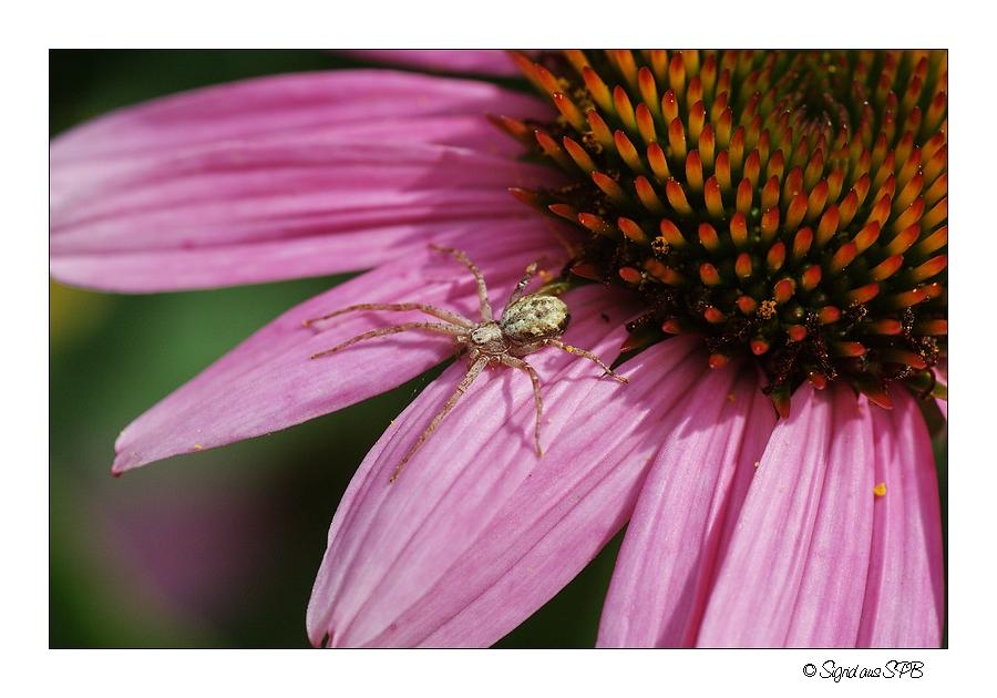 Auch Spinnen lieben die Sonnenstrahlen ...
