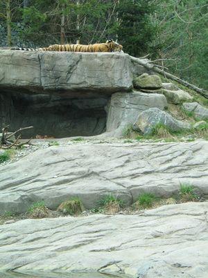 auch Tiger müssen mal schlafen