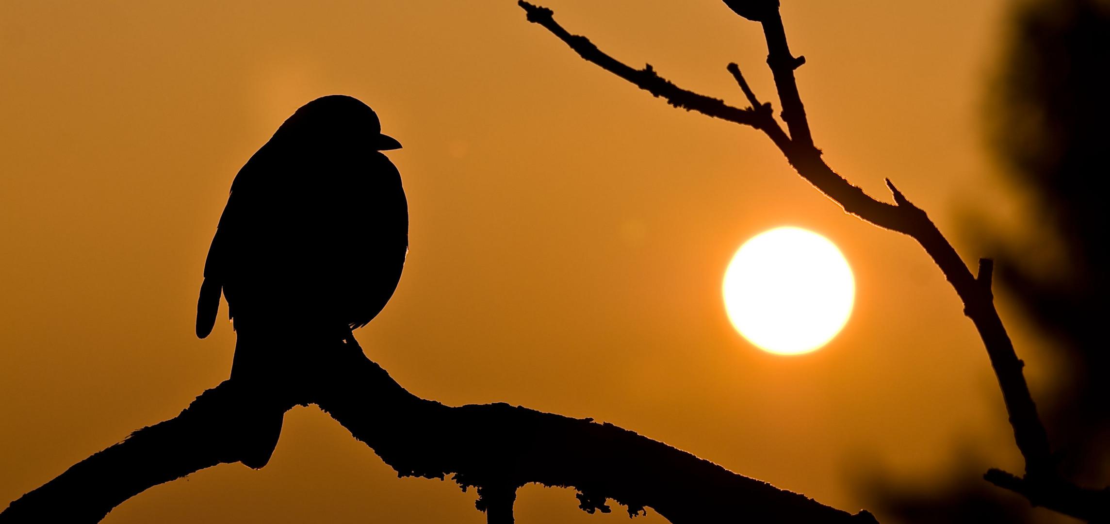 Auch Vögel haben ihre besinnliche Momente ;-)