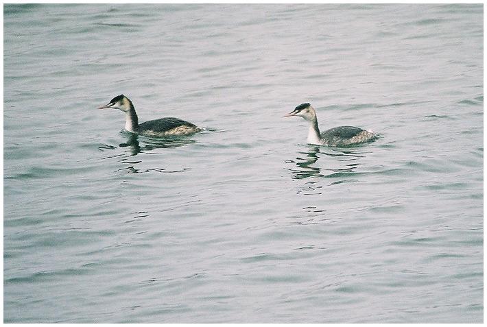 Auch Wasservögel ...