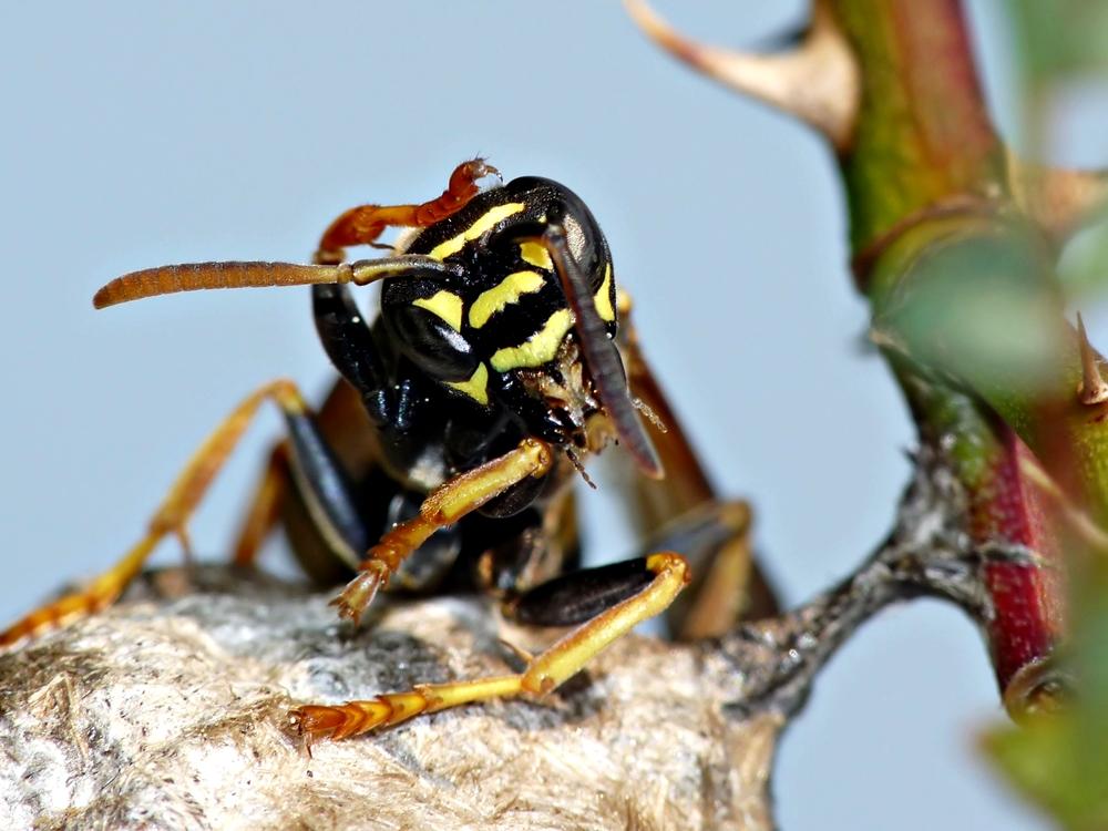 Auch Wespen kommen mal ins Grübeln ...
