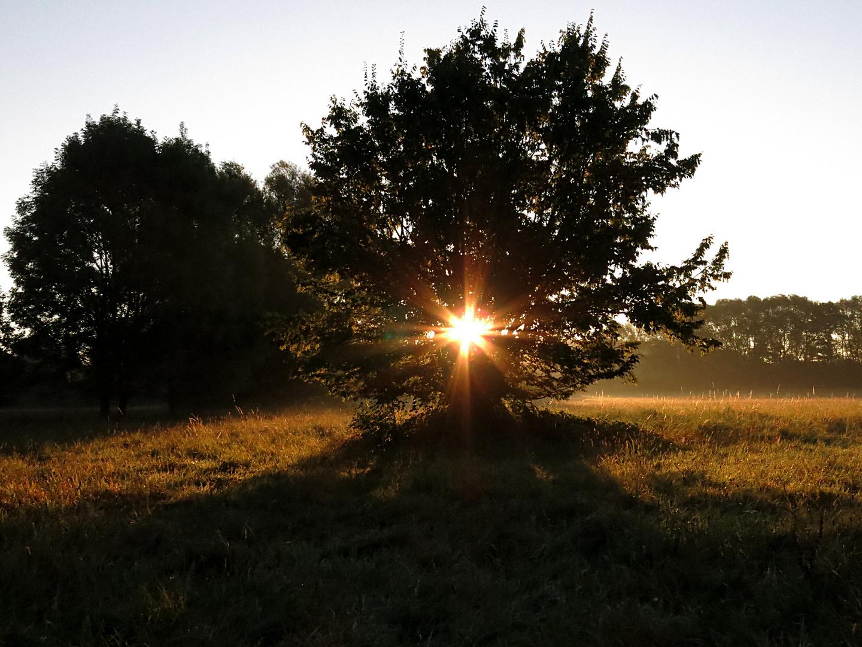 Auenlandschaft am Morgen