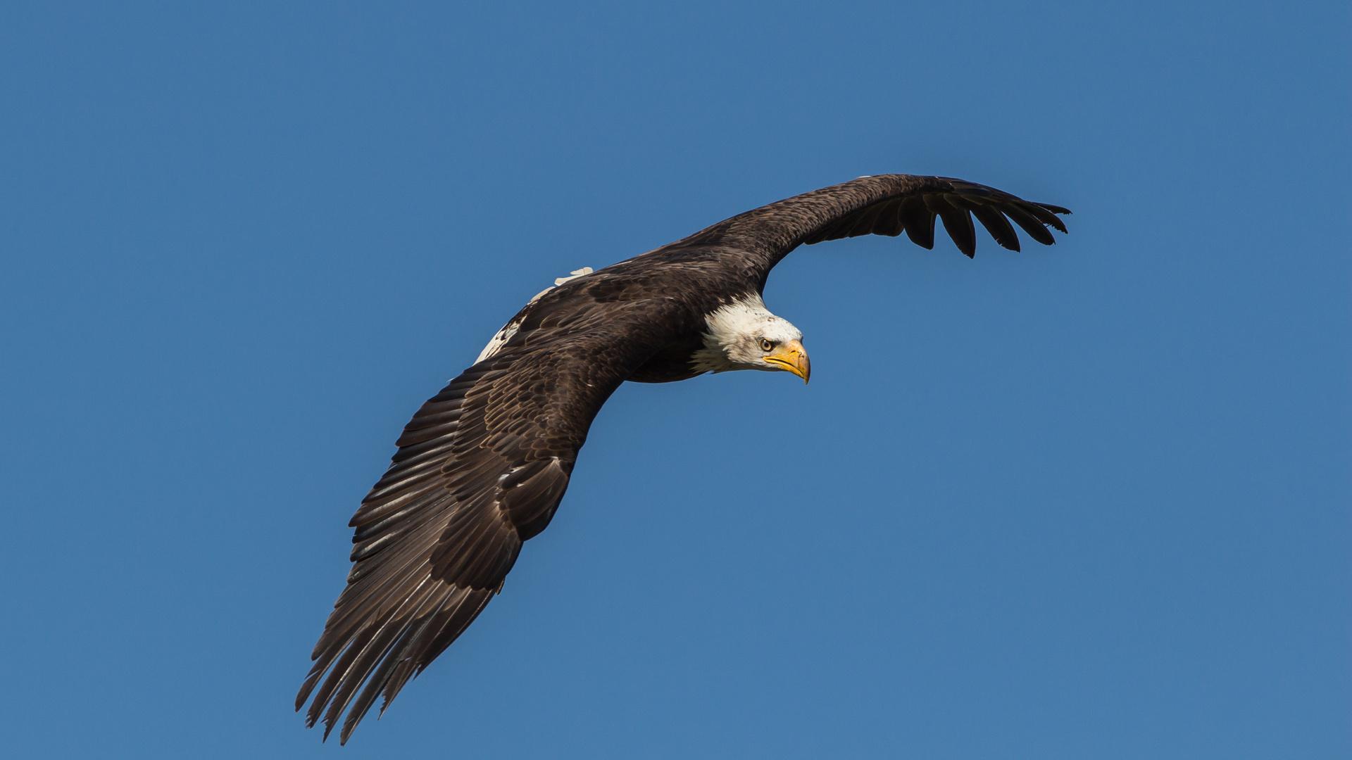 Auf Adlers Schwinge...