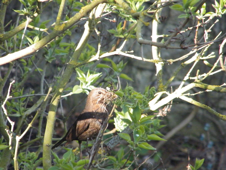 auf, auf zum Nestbau