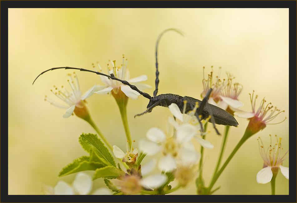 auf Blüten gebettet