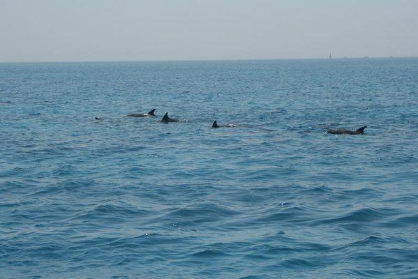 Auf Delfintour