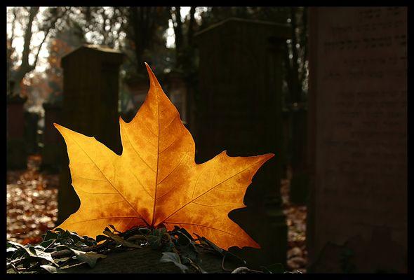 Auf dem Alten Jüdischen Friedhof, 09.11. Herbst