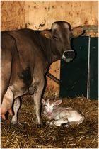 Auf dem Bauernhof (6): Die Geburt