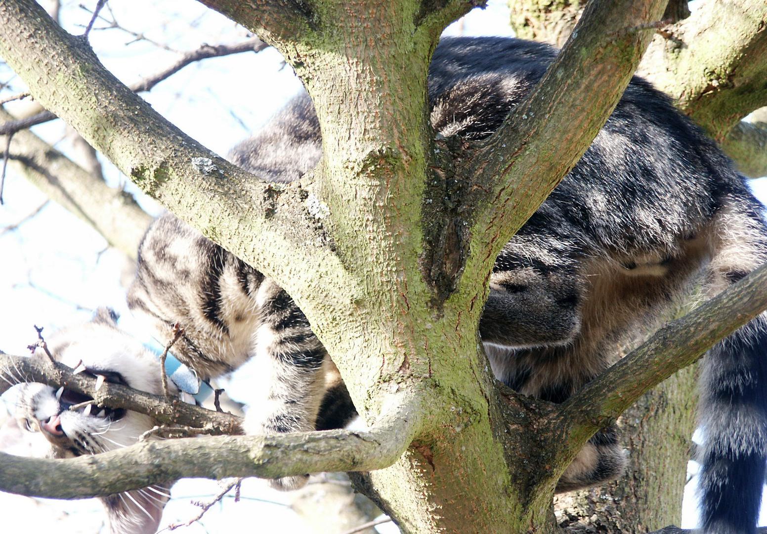 Auf dem Baume die Zähne wetzen.