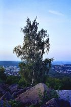 Auf dem Birkenkopf - blaue Stunde