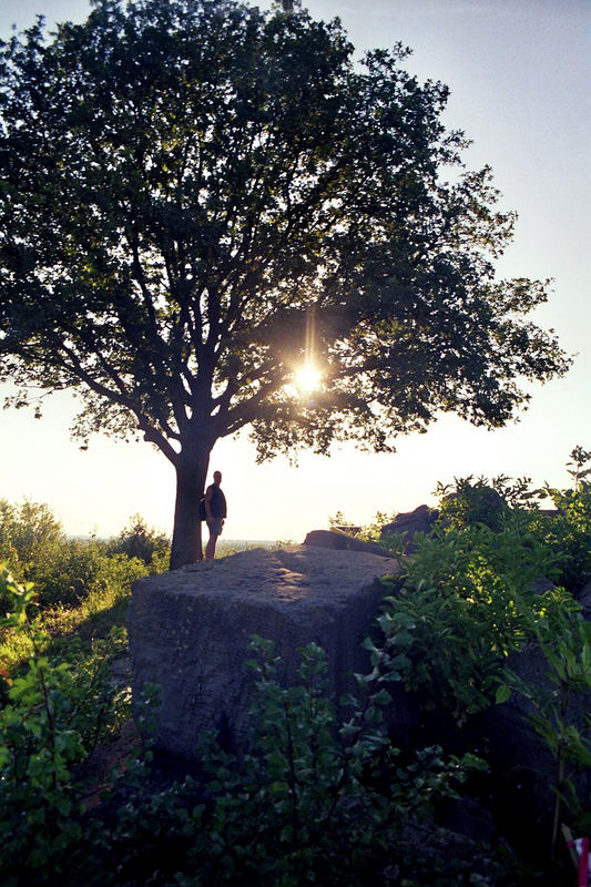 Auf dem Birkenkopf - Quader - Eiche - Mann - Sonne