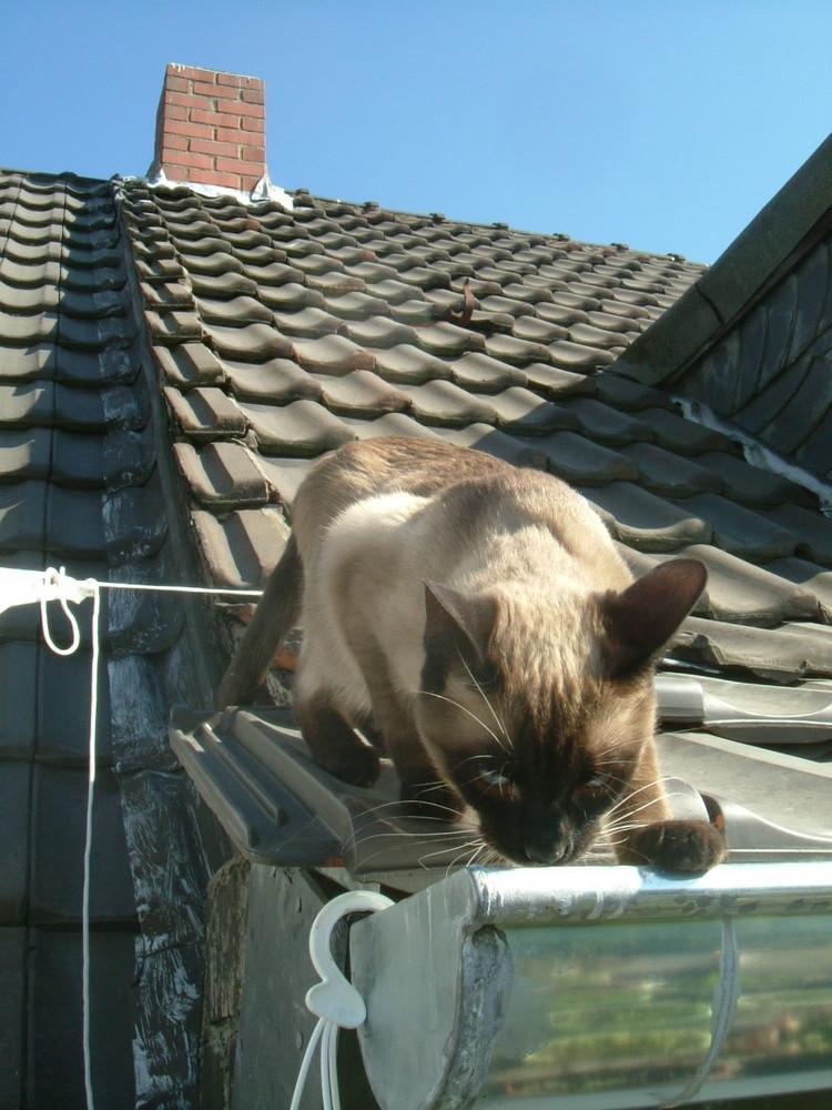 Auf dem Dach!