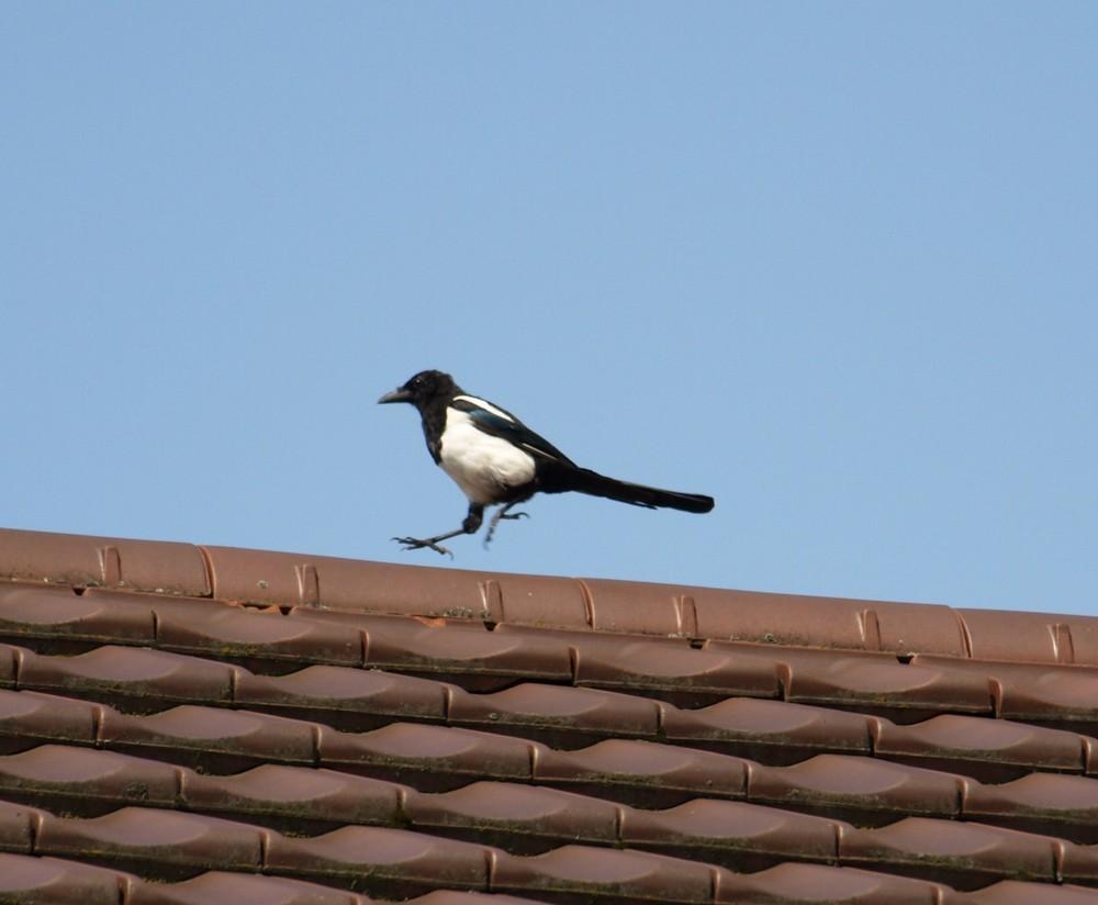 Auf dem Dach Juchhe...