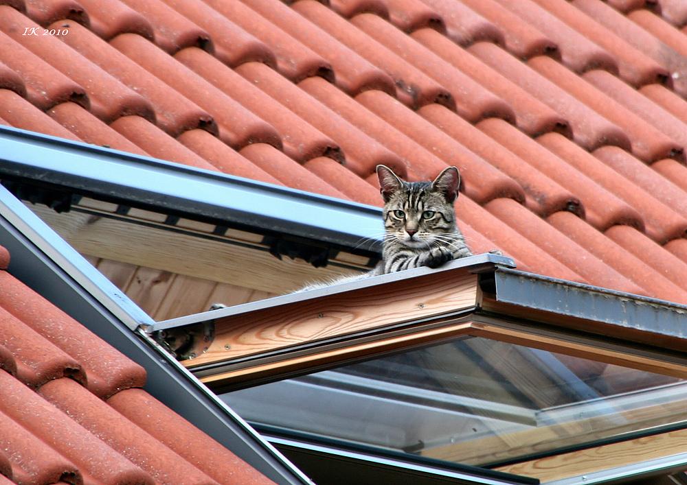 Auf dem dachfenster foto bild tiere haustiere katzen bilder auf fotocommunity - Dachfenster bilder ...