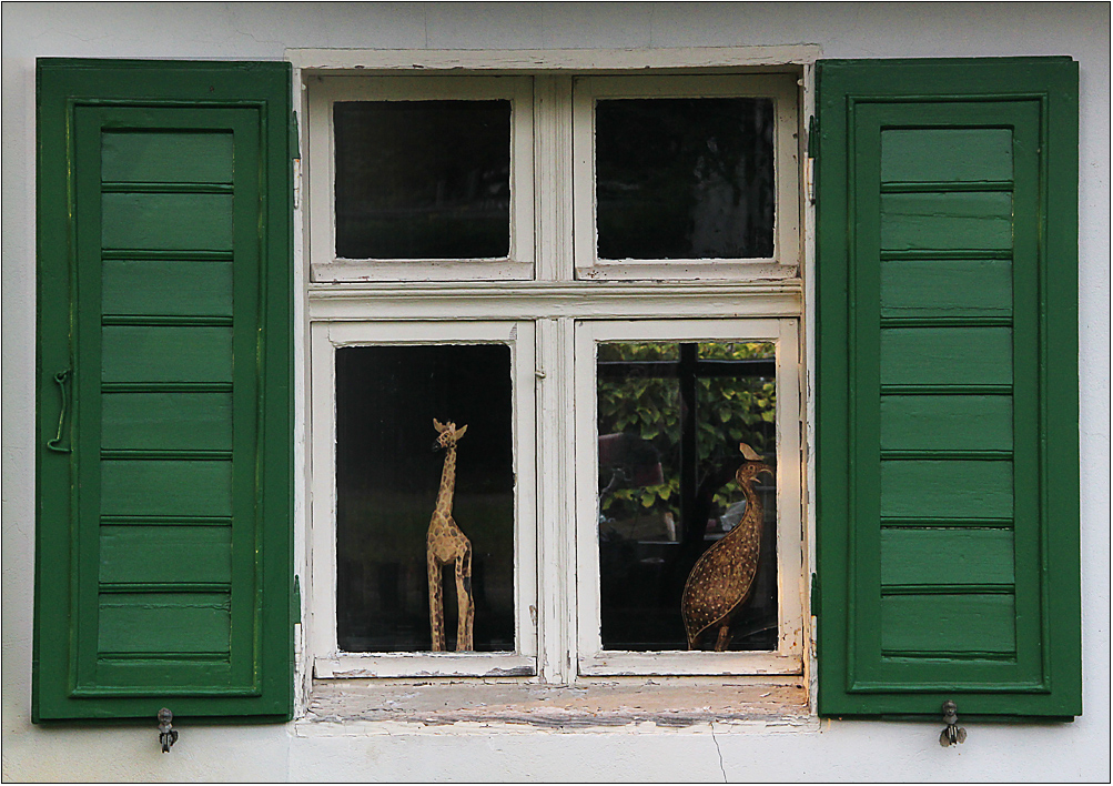 Auf dem Dorf sind Giraffen ...