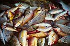 Auf dem Fischmarkt in Galle