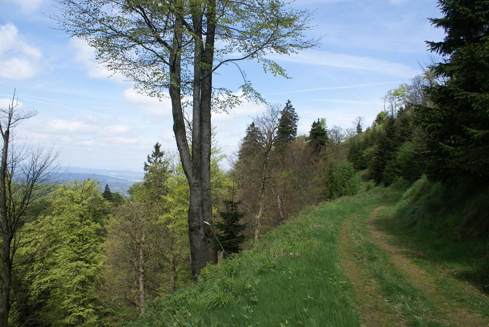 Auf dem grauen Weg am Inselsberg