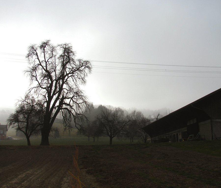 auf dem Land (3)