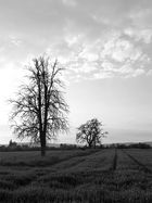 Auf dem Lande [6]