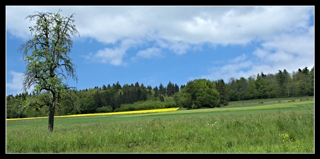 Auf dem Lande ists am Schönsten