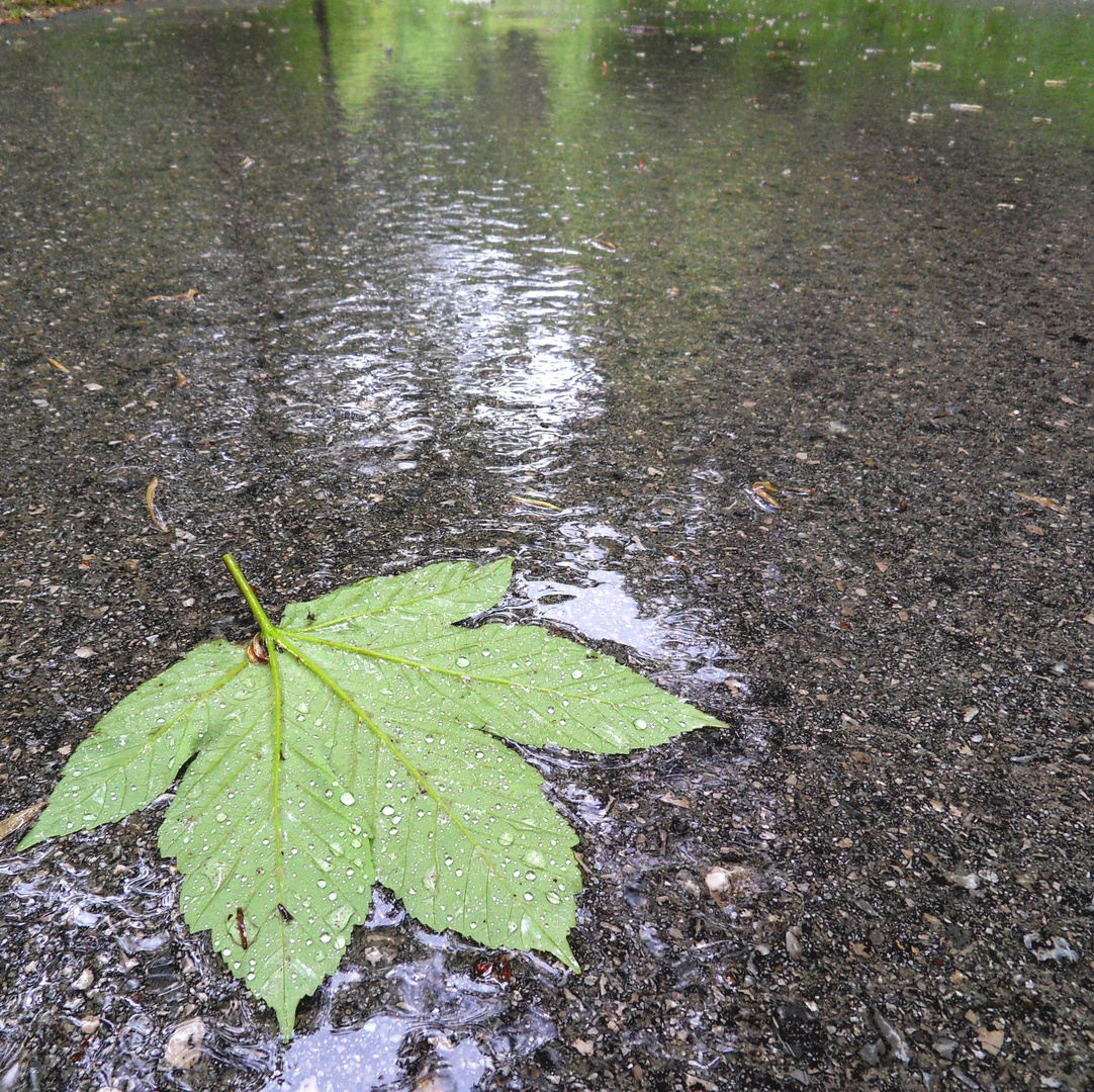 .....auf dem nassen Asphalt