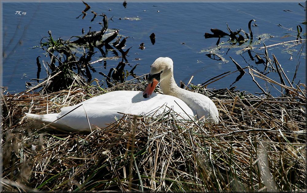 Auf dem Nest......