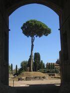 auf dem Palatin über dem Forum Romanum