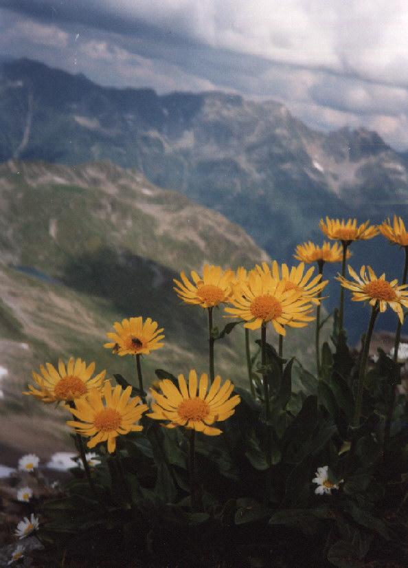 auf dem Piescha in Graubünden - Schweiz
