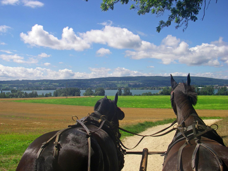 Auf dem Rücken der Pferde #2