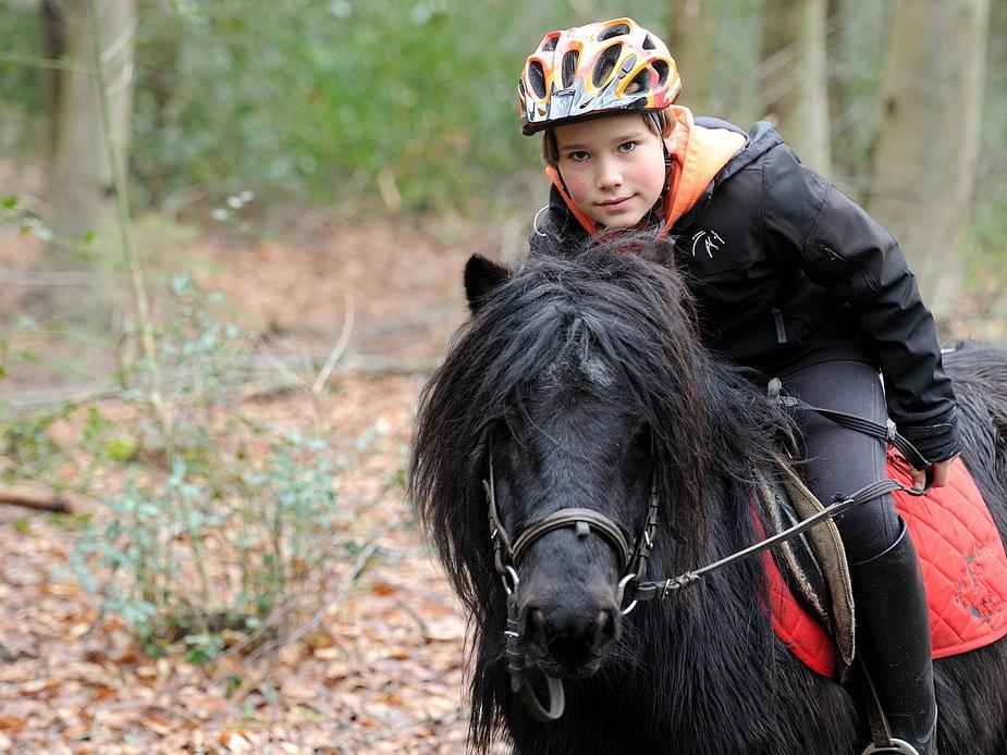auf dem Rücken der Pferde ...