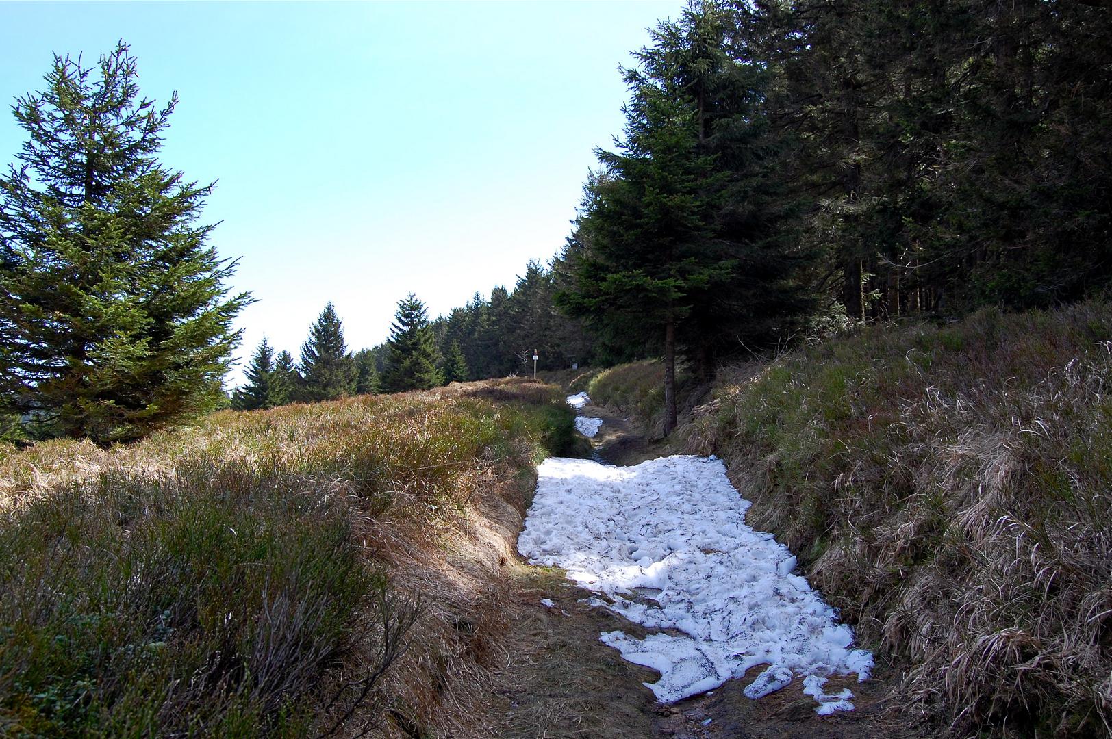 Auf dem Ulmenweg am Wurmberg…